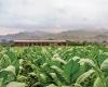 Nicaragua farm
